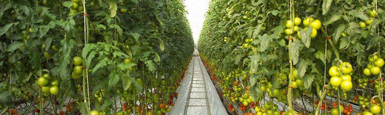 Ứng dụng CNTT trong nông nghiệp: Tiềm năng lớn cho doanh nghiệp Việt